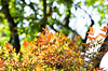 Autumn Bush Colors Blend 1 of 2