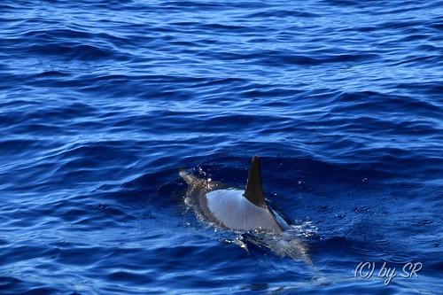 Azores2014_0387