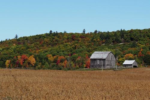 quyon québec canada autumn automne farm ferme fallcolors municipalityofpontiac pontiac northonslow