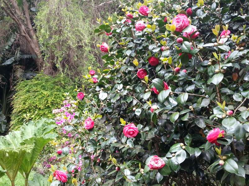 Jardines Panrico 220413 47