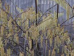 土, 2013-04-13 11:43 - ブルックリン植物園