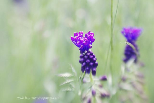 Flor en modo lensbaby