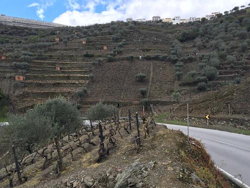 2016-04-16-Vallee-du-Douro-111