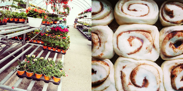 greenhouse, cinnamon rolls, baking, gardening