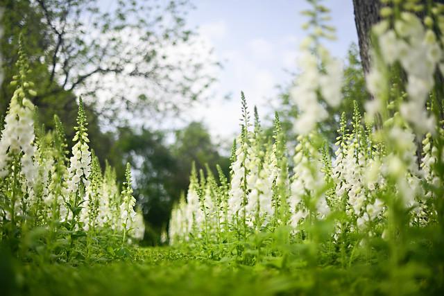 Flowers at the Dallas Arboretum
