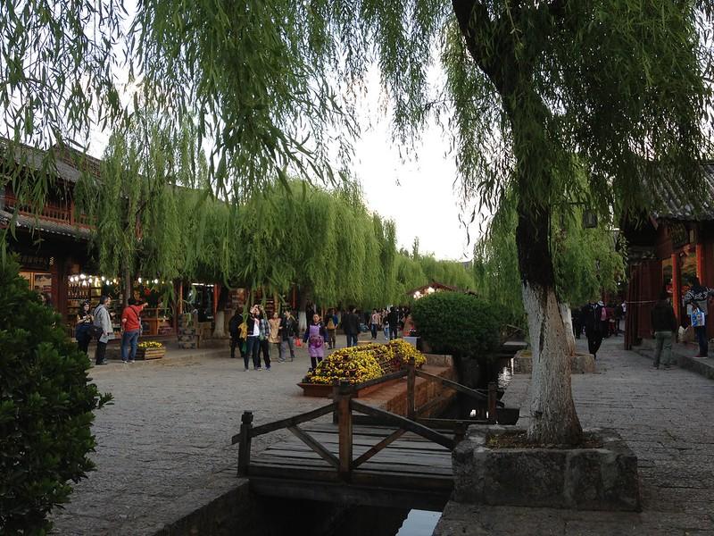 丽江古城垂杨柳
