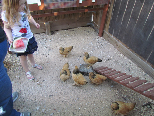 bailey watermelon chickens
