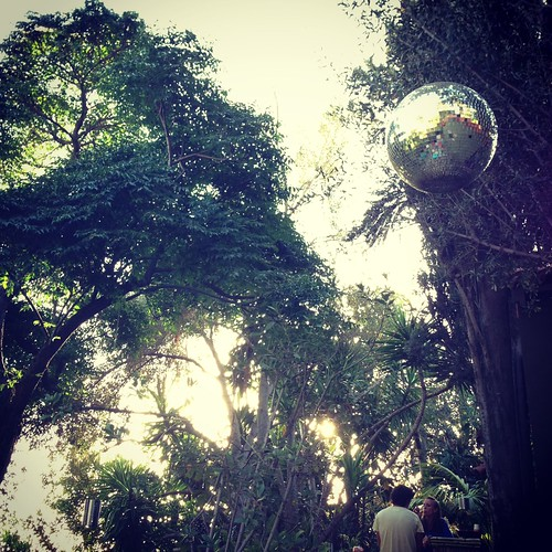 disco ball in the wild