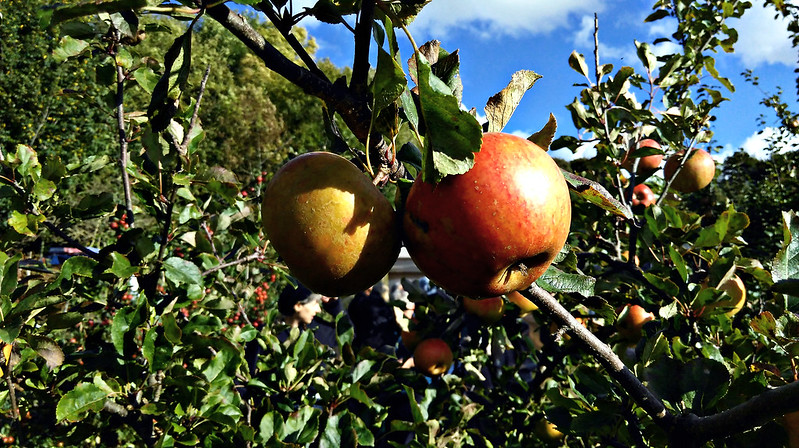 Apple day 2016-apple5
