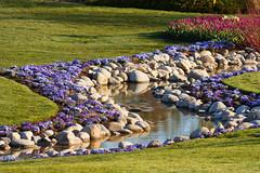 Spring Flower Stream