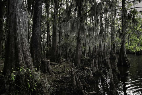 spanishmoss cypress caddolake texasstateparks