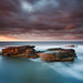 Rocky Island, Seaton Sluice by Alistair Bennett