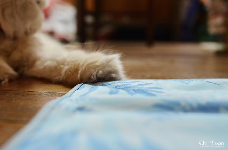 冰涼凝膠枕墊01.jpg