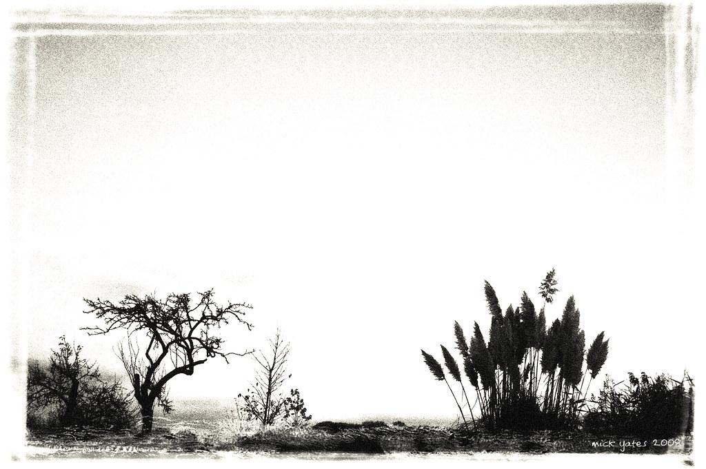 Skyline & Pampas Grass
