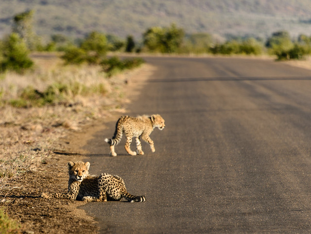 Kruger National Park, South Africa - On The Road Again ...