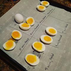 My life right now. @zoeeturtlee #eggsperiments #eggshellent #egghead #toomanyeggpuns