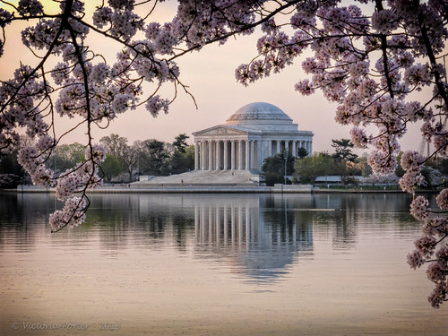 Jefferson Memorial framed by spring Cherry Blossoms… an iconic image...