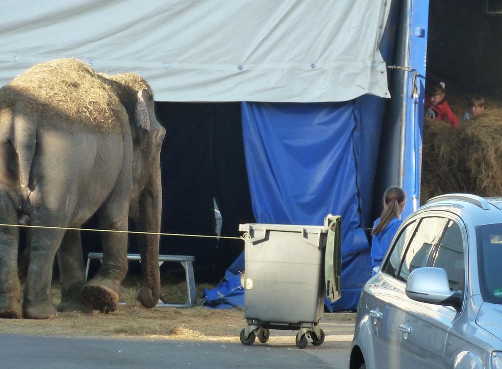 минск 1 мая 2013 слон 8