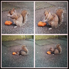 Squirrel munching on a doughnut. Cute.
