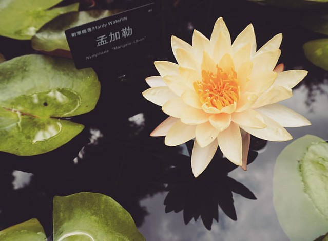 #shanghai #shanghailife #lotus #china #summer #iphone