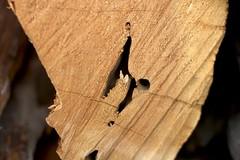The Inner Secrets of Wood