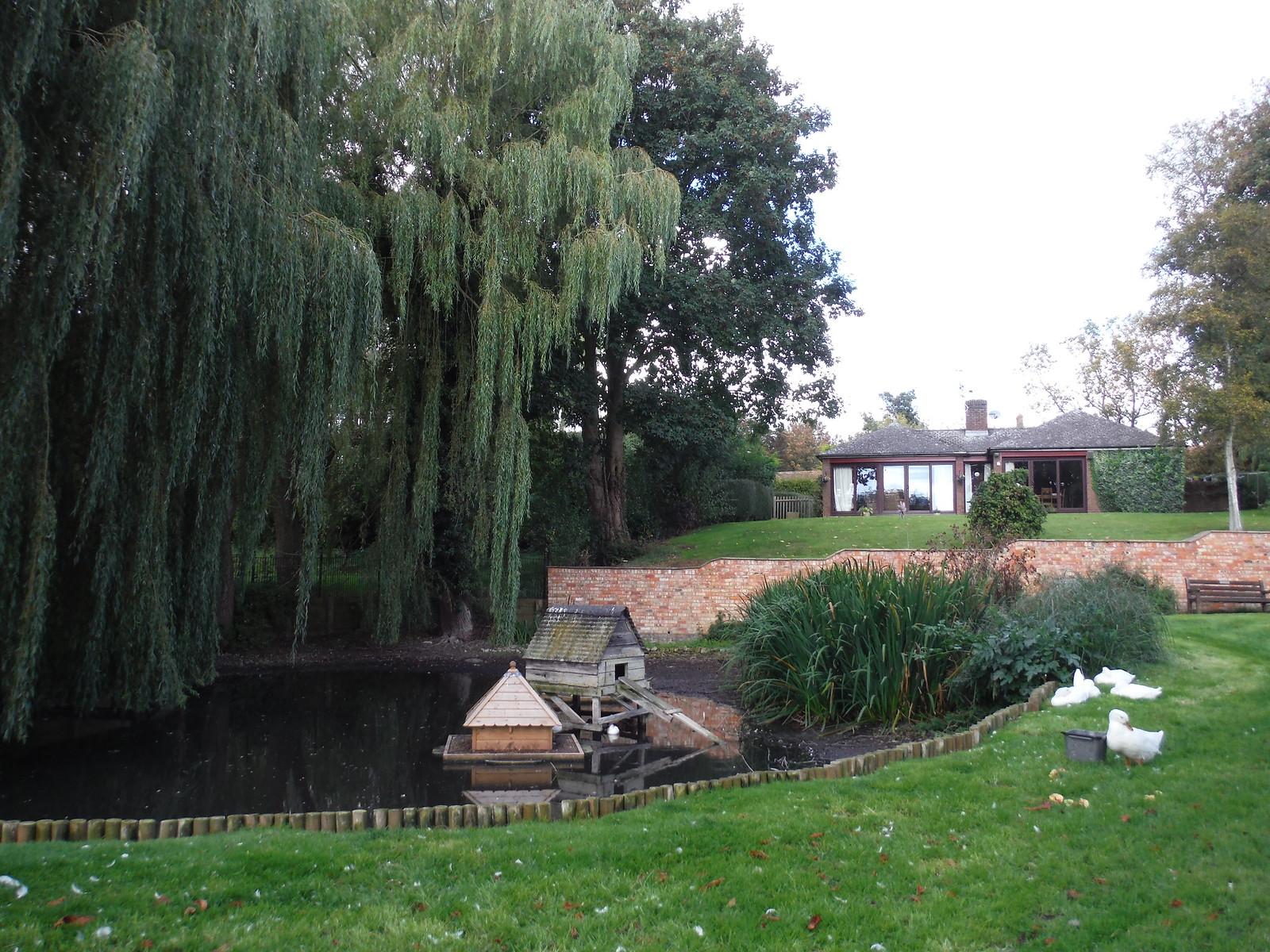 Pond in Weedon SWC Walk 194 Aylesbury Vale Parkway to Aylesbury
