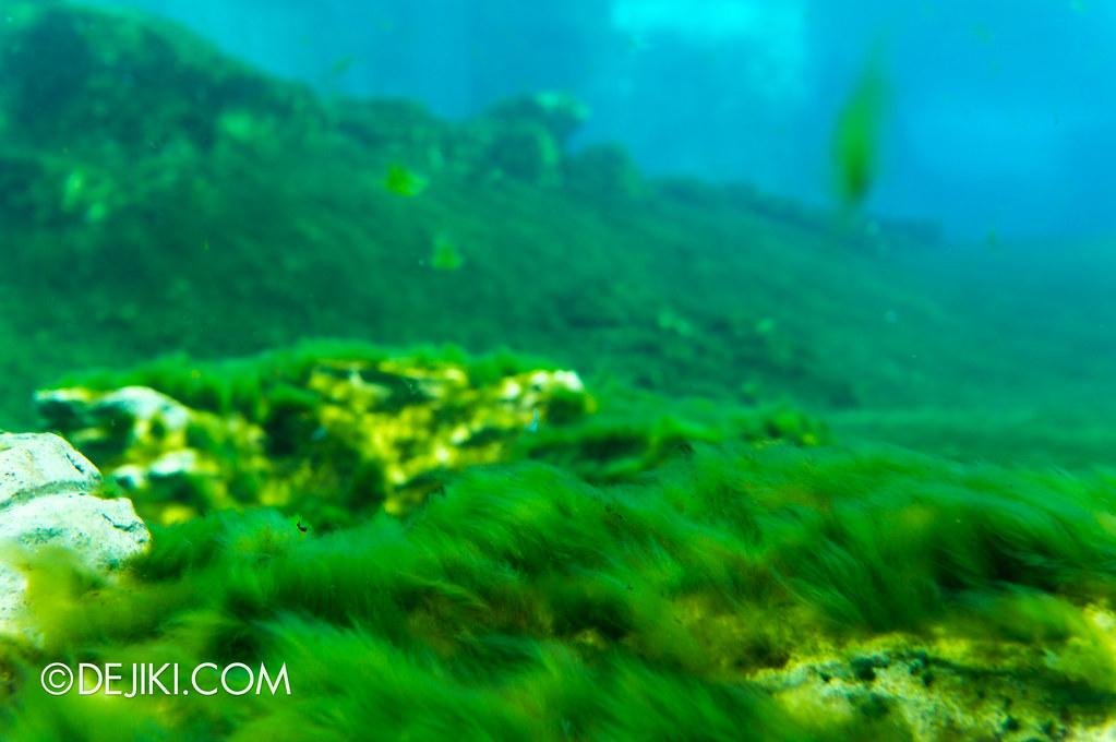 Marine Life Park Singapore - S.E.A. Aquarium - dolphin island vegetation