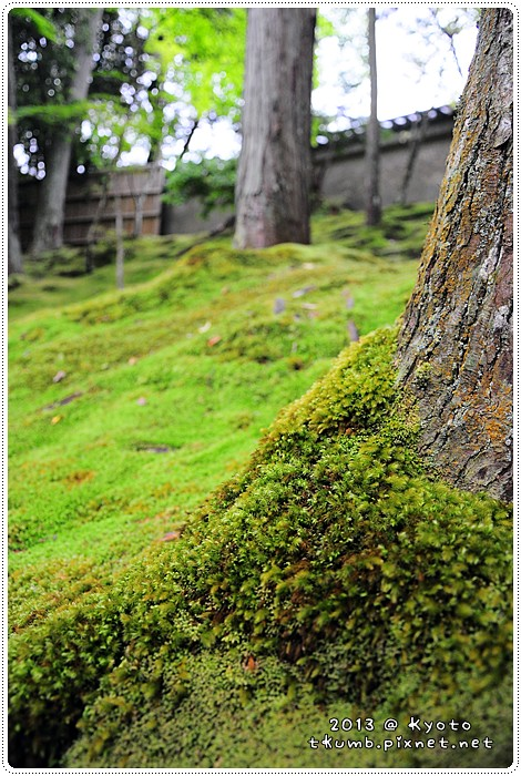 苔寺20130519-143606.jpg