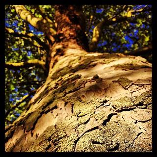 Tree bark #nature #random