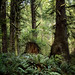 forest at ecola by jody9