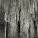 Mangrove mystery by annems1