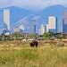 Buffalo and Denver _9682