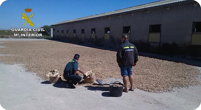 La Guardia Civil evita el robo de 15 toneladas de almendra en una finca de El Albujón