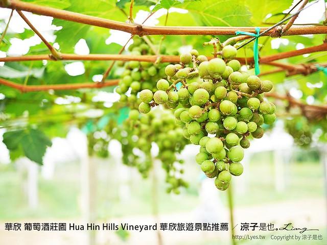 華欣 葡萄酒莊園 Hua Hin Hills Vineyard 華欣旅遊景點推薦 7
