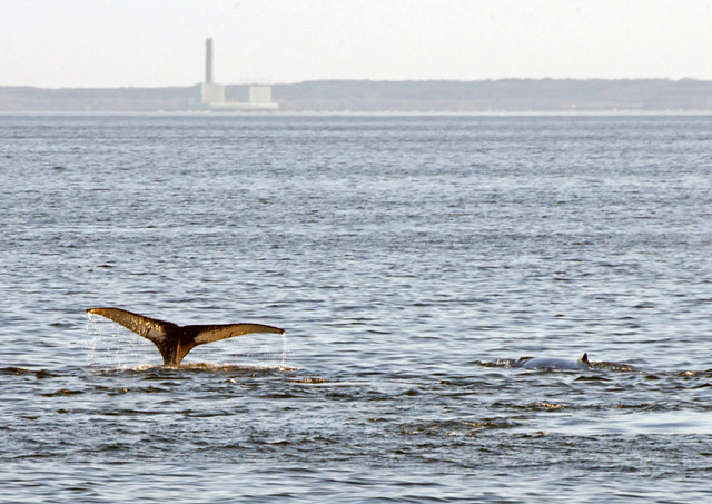 Whales cavort beyond Canal Station
