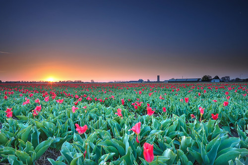 Sunrise at Lisse 4th of May 2013 by Nathalie Stravers