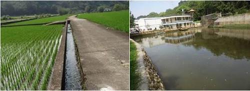 混凝土化的水圳及埤塘