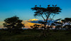 Serengeti Sunset 3746
