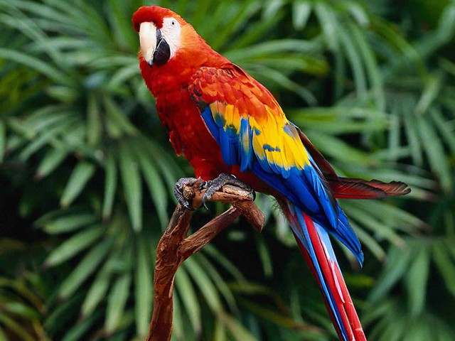 aves-diarioecologia