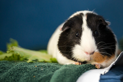 Juan Carlos, the Guinea Pig by Garen M.