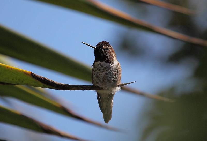 General Bird & Nest Info
