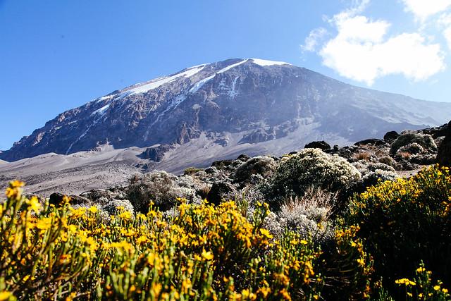 TREK MT. KILIMANJARO WITH LICIOUS ADVENTURE LTD