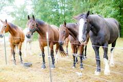 Horsing Around #equestrian
