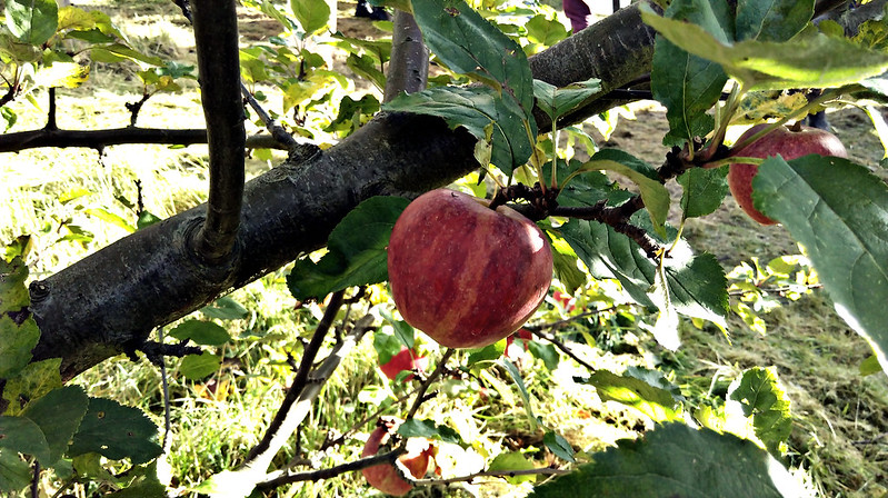 Apple day 2016-apple4