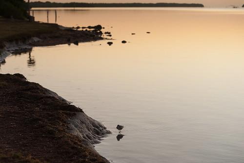 adventure kevinvanemburghphotography nikon photoproject travel bird nature nationalpark everglades evergladesnationalpark water ocean beach florida southflorida firstlight sunrise sunrisephotography