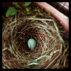 nest, bird nest, egg, close-up,