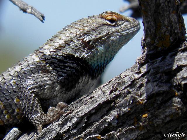 Big Lizard 1