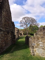 The Abbey ruins