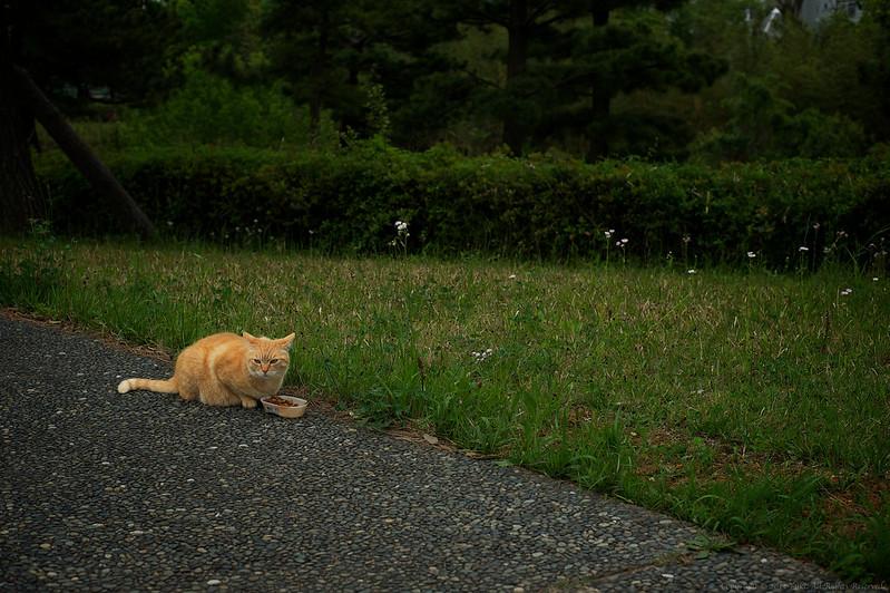 stray cat #3