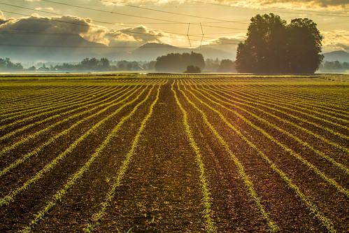 morning sun tree lines sunshine slovenia fields cluds kranj